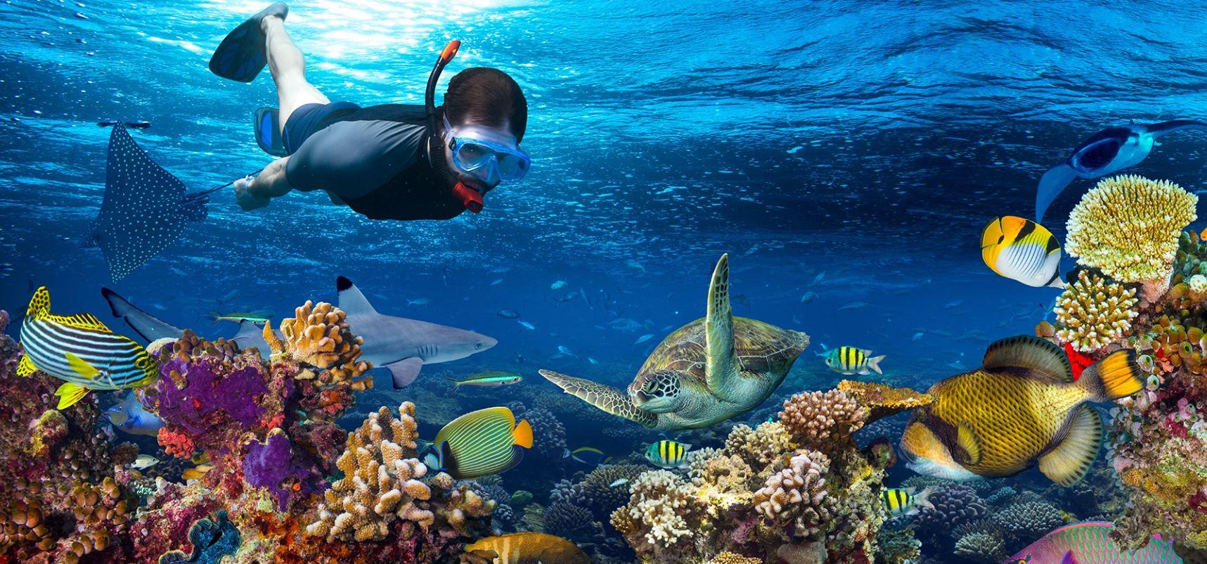 arrecofes san francisco snorkel viajes singles excursiones