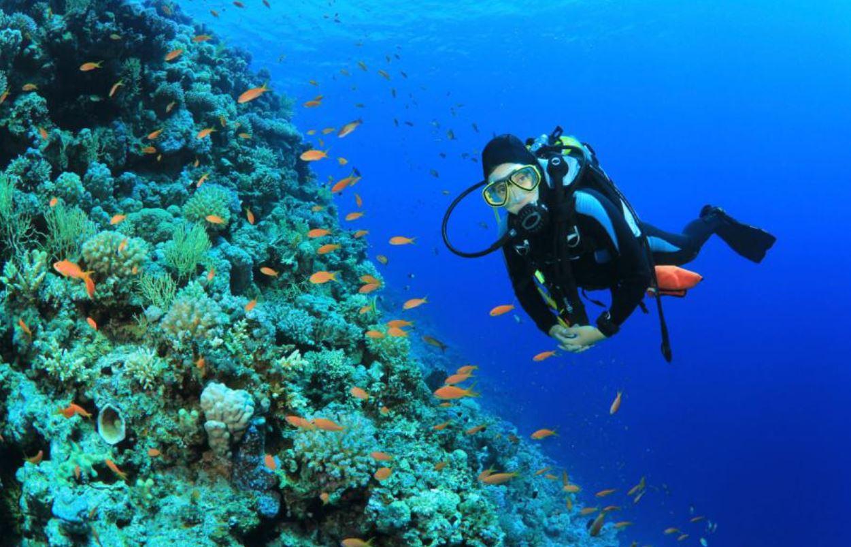 Club de Buceo en Hotel Ocean Turqueso Puerto Morelos Riviera Maya
