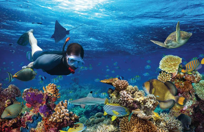Mejores Excursiones Punta Cana Blue Marin b2bviajes