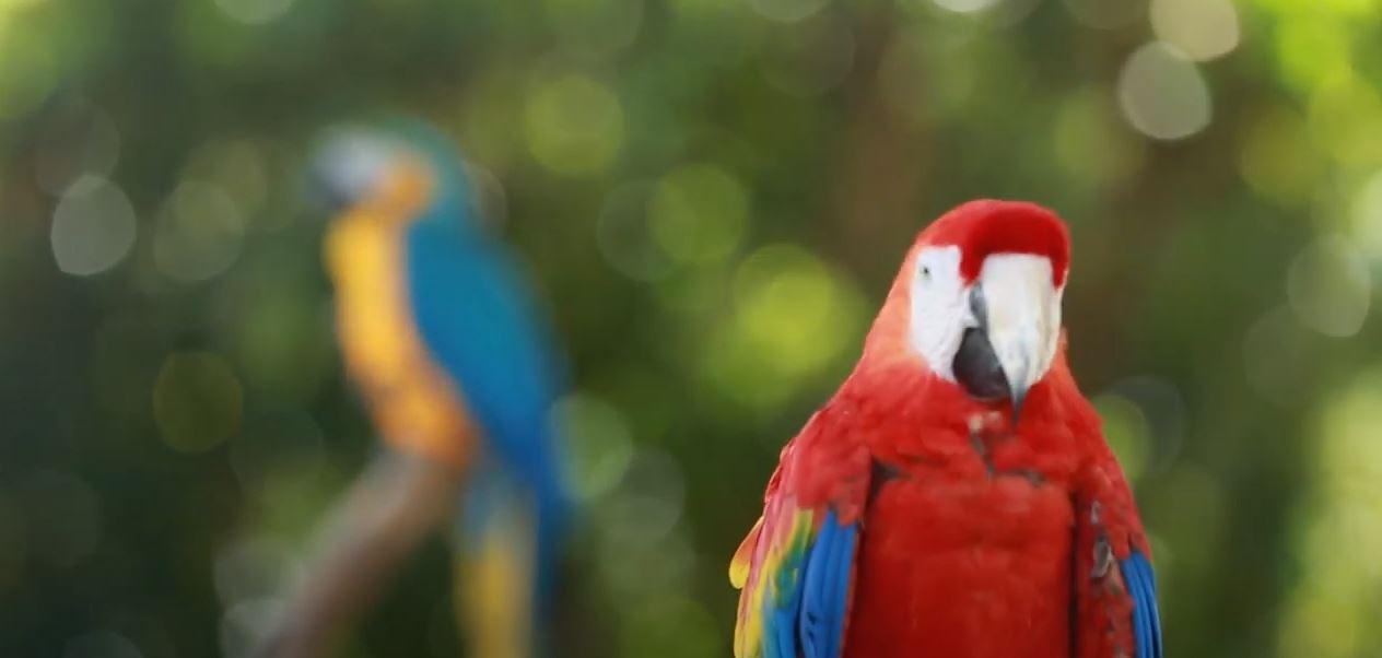 Manati Park Que hacer en Punta Cana beb2 Viajes