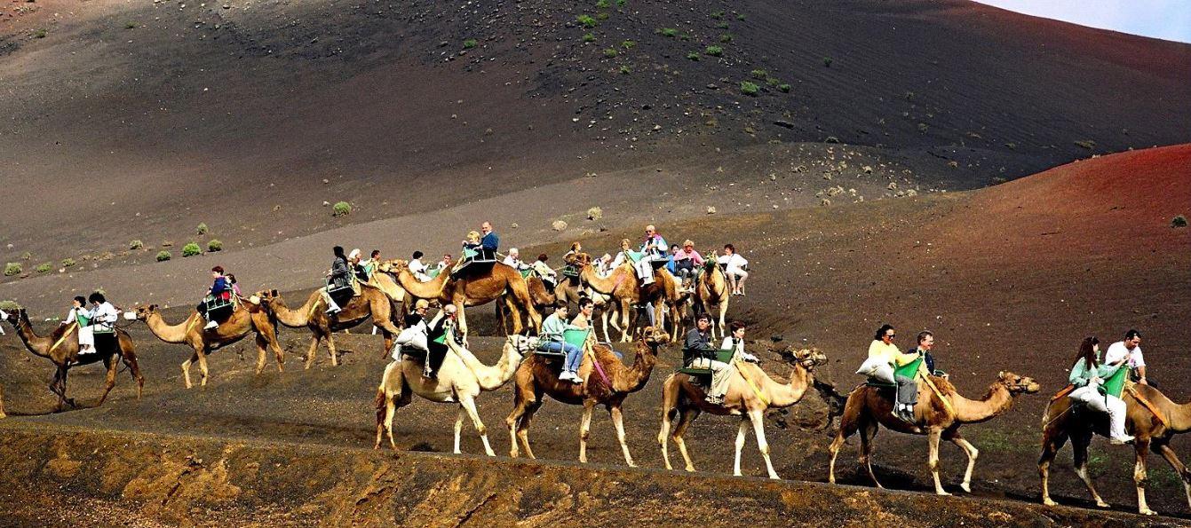 Paseo en camello en las montañas de fuego de lanzarote