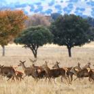 ciervos_-_parque_nacional_de_cabaneros_-_ciudad_real.png?itok=zA946qHP